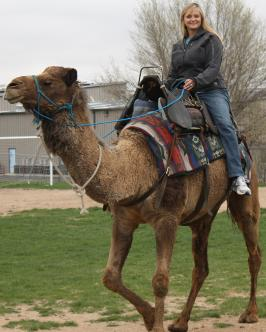Laura free reining Zambee. You too can teach your camel to ride!