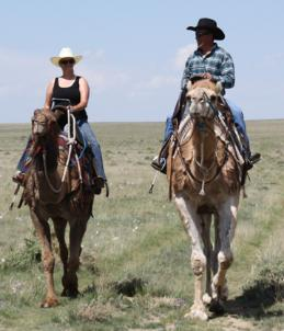 Trail riding with the camels at the Pawnee Grasslands.